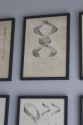 8 framed Lithographs dated 1892 - picture 4